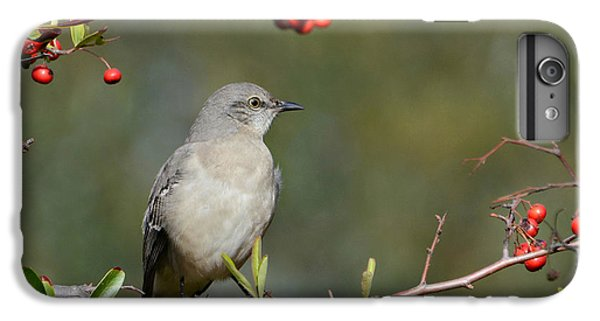 Surrounded By Berries 2 IPhone 6 Plus Case by Fraida Gutovich