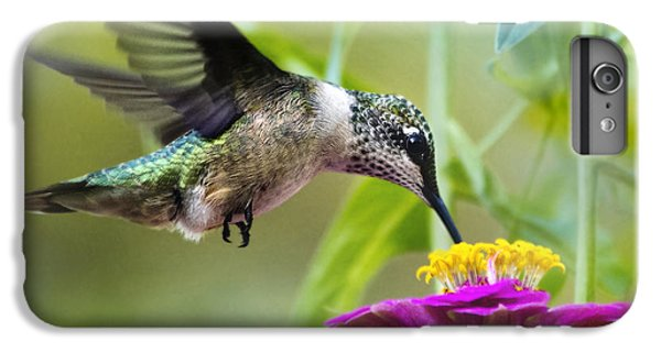 Sweet Success Hummingbird Square IPhone 6 Plus Case by Christina Rollo