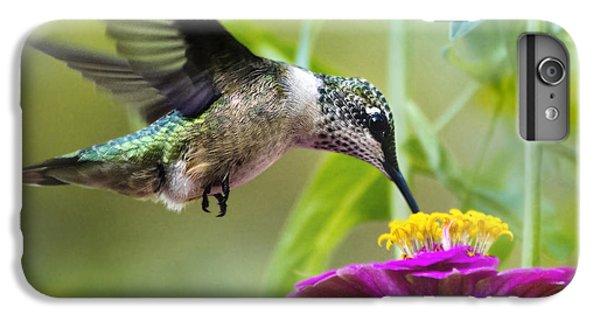 Sweet Success Hummingbird Square IPhone 6 Plus Case by Christina Rollo