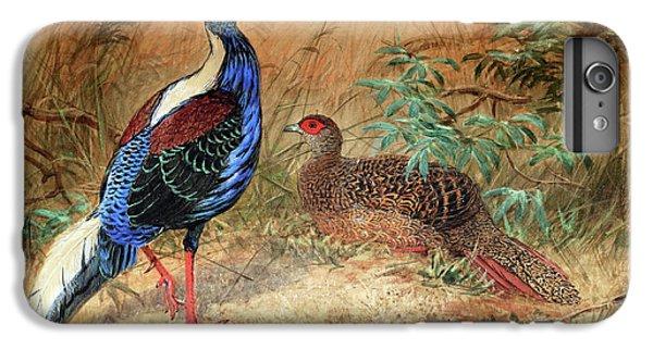 Swinhoe's Pheasant  IPhone 6 Plus Case