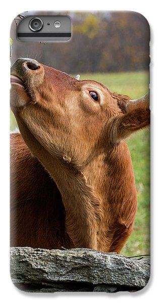 IPhone 6 Plus Case featuring the photograph Tasty by Bill Wakeley