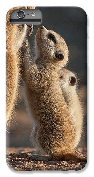Meerkat iPhone 6 Plus Case - The Baby Is Hungry by Happy Home Artistry