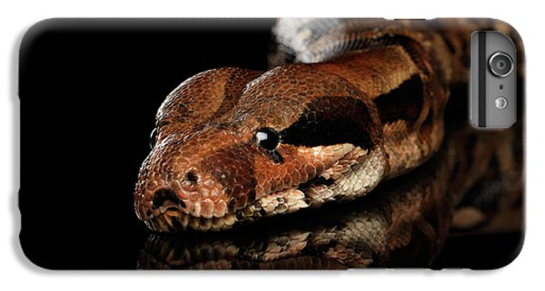 The Boa Constrictors, Isolated On Black Background IPhone 6 Plus Case by Sergey Taran