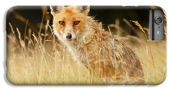 The Catcher In The Grass - Wild Red Fox IPhone 6 Plus Case by Roeselien Raimond
