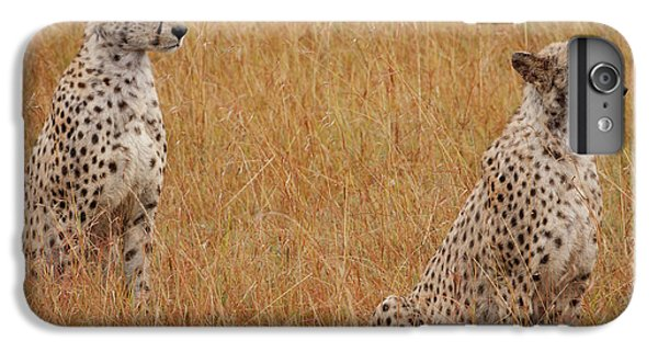 The Cheetahs IPhone 6 Plus Case by Nichola Denny
