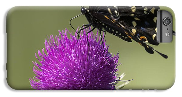 The Eastern Black Swallowtail  IPhone 6 Plus Case by Ricky L Jones