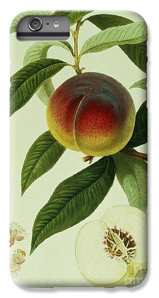 The Galande Peach IPhone 6 Plus Case by William Hooker