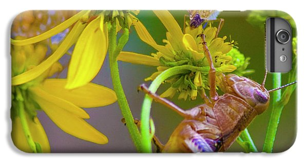 Grasshopper iPhone 6 Plus Case - The Little Things by Betsy Knapp