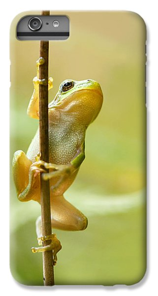 The Pole Dancer - Climbing Tree Frog  IPhone 6 Plus Case