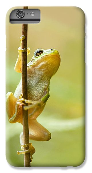 The Pole Dancer - Climbing Tree Frog  IPhone 6 Plus Case by Roeselien Raimond
