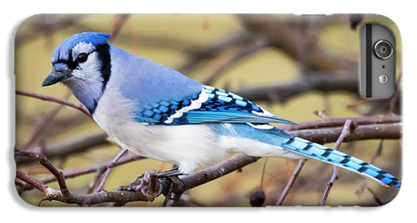 The Winter Blue Jay  IPhone 6 Plus Case