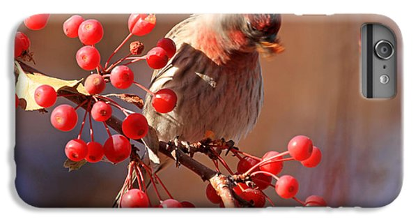 These Berries Are Making Me Dizzy  IPhone 6 Plus Case