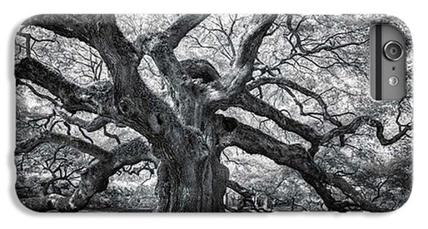 iPhone 6 Plus Case - This Tree Is Located In Charleston by Jon Glaser