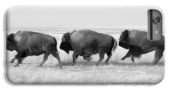 Three Buffalo In Black And White IPhone 6 Plus Case