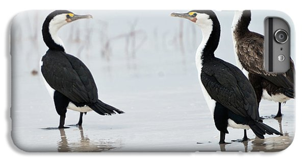Three Cormorants IPhone 6 Plus Case by Werner Padarin