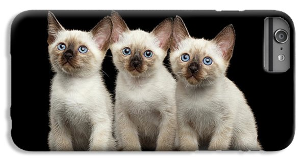 Cat iPhone 6 Plus Case - Three Kitty Of Breed Mekong Bobtail On Black Background by Sergey Taran