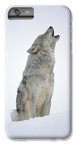 Timber Wolf Portrait Howling In Snow IPhone 6 Plus Case