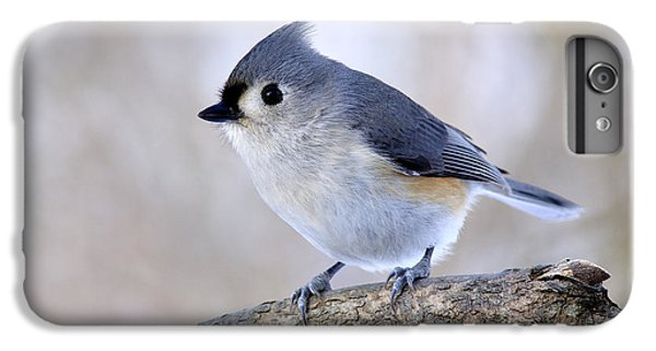 Titmouse iPhone 6 Plus Case - Tufted Titmouse On Dogwood 2 by Thomas R Fletcher