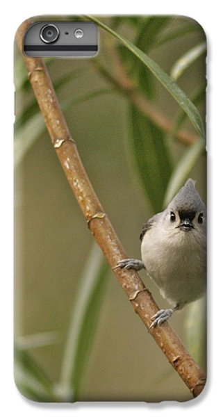 Titmouse iPhone 6 Plus Case - Tufted Titmouse by Phill Doherty