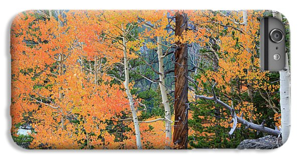 Twisted Pine IPhone 6 Plus Case by David Chandler