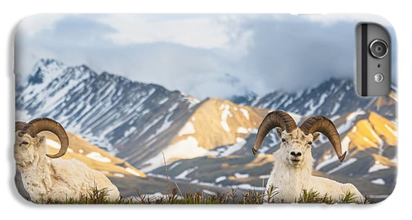 Two Adult Dall Sheep Rams Resting IPhone 6 Plus Case by Michael Jones