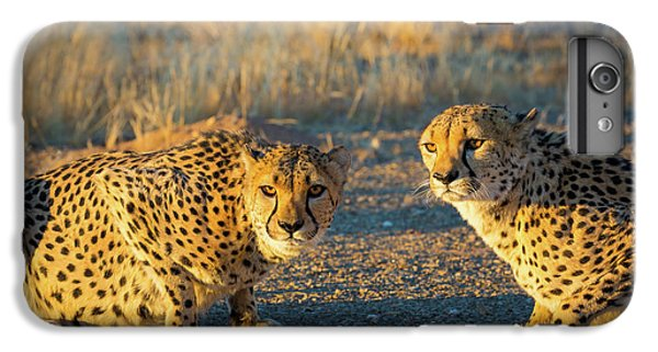 Two Cheetahs IPhone 6 Plus Case by Inge Johnsson