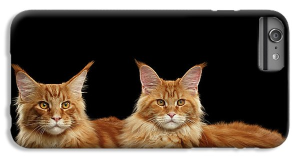 Cat iPhone 6 Plus Case - Two Ginger Maine Coon Cat On Black by Sergey Taran