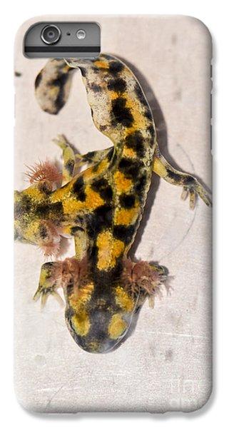 Two-headed Near Eastern Fire Salamande IPhone 6 Plus Case