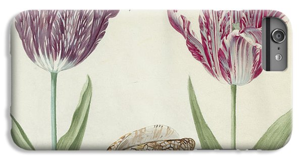 Grasshopper iPhone 6 Plus Case - Two Tulips A Shell And A Grasshopper by Jacob Marrel