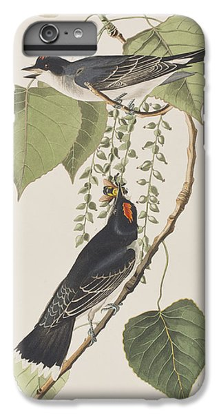 Tyrant Fly Catcher IPhone 6 Plus Case by John James Audubon