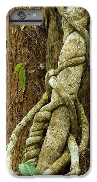 IPhone 6 Plus Case featuring the photograph Vine by Werner Padarin