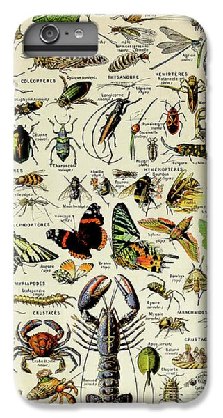 Vintage Illustration Of Various Invertebrates IPhone 6 Plus Case