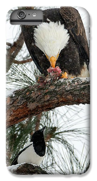 Magpies iPhone 6 Plus Case - Waiting For The Scraps by Mike Dawson