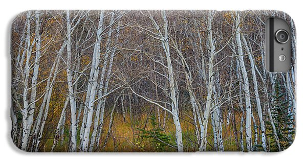 IPhone 6 Plus Case featuring the photograph Walk In The Woods by James BO Insogna