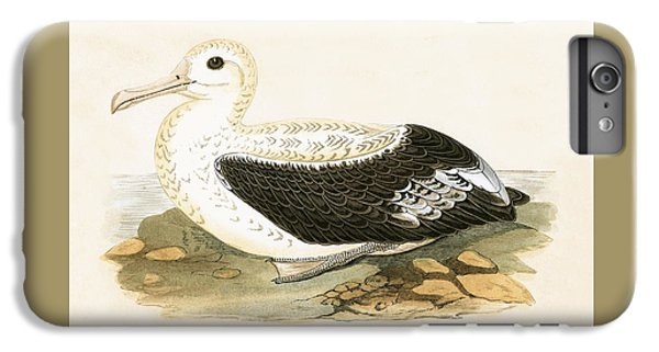 Wandering Albatross IPhone 6 Plus Case by English School