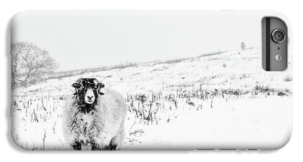 Sheep iPhone 6 Plus Case - Which Way Is South? by Janet Burdon