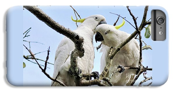 White Cockatoos IPhone 6 Plus Case