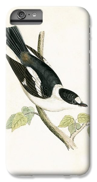 Flycatcher iPhone 6 Plus Case - White Collared Flycatcher by English School
