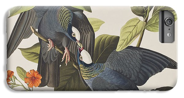 White Crowned Pigeon IPhone 6 Plus Case by John James Audubon