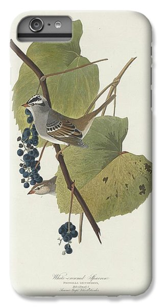 White-crowned Sparrow IPhone 6 Plus Case by Anton Oreshkin