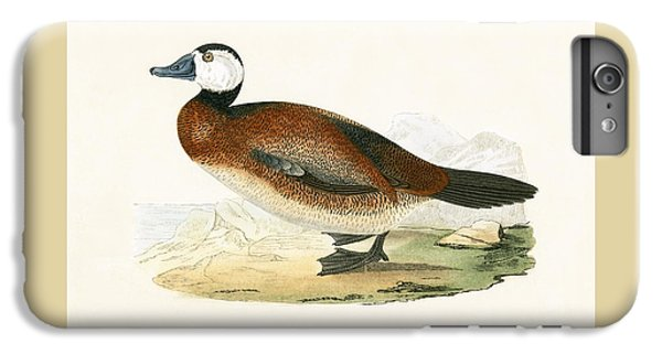 White Headed Duck IPhone 6 Plus Case by English School