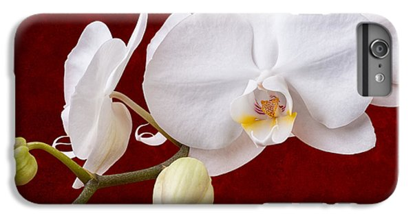 White Orchid Closeup IPhone 6 Plus Case by Tom Mc Nemar