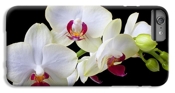 Orchid iPhone 6 Plus Case - White Orchids by Garry Gay