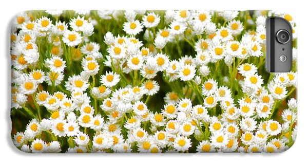 iPhone 6 Plus Case - Wildflowers by Holly Kempe