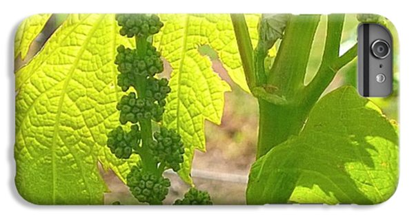 Orange iPhone 6 Plus Case - #wine On The #vine 😊 #vineyard by Shari Warren
