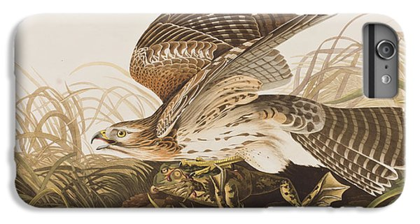 Winter Hawk IPhone 6 Plus Case by John James Audubon