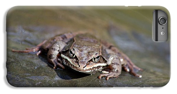 IPhone 6 Plus Case featuring the photograph Wood Frog Close Up by Christina Rollo