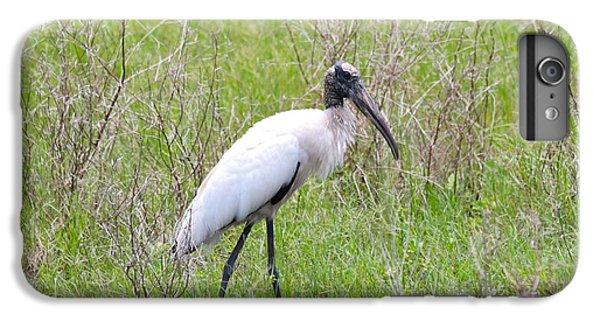 Wood Stork In The Marsh IPhone 6 Plus Case by Carol Groenen