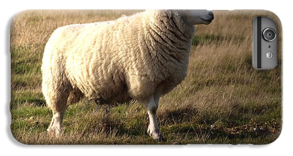 Sheep iPhone 6 Plus Case - Woolly Coat by Sharon Lisa Clarke