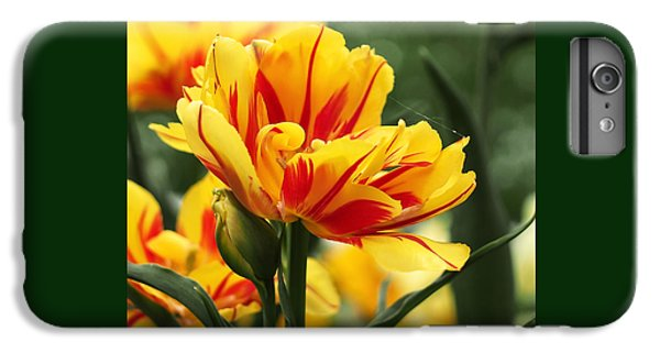Yellow And Red Triumph Tulips IPhone 6 Plus Case